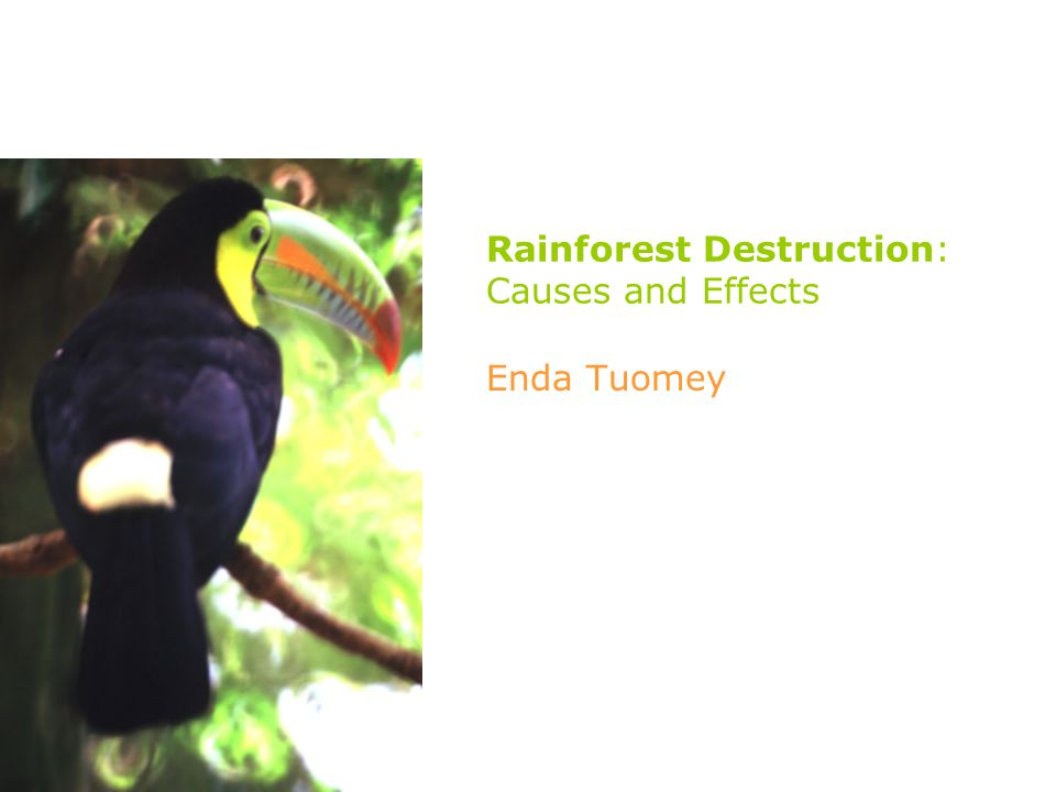 Rainforest Destruction: Causes and Effects Enda Tuomey