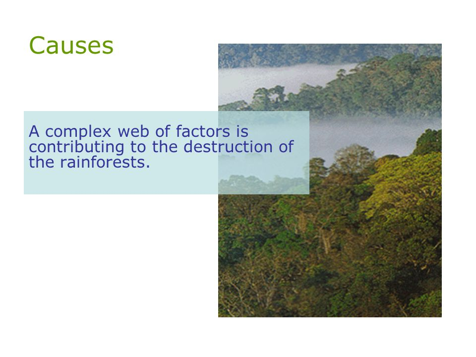 Causes A complex web of factors is contributing to the destruction of the rainforests.