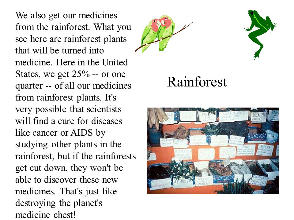 We also get our medicines from the rainforest.