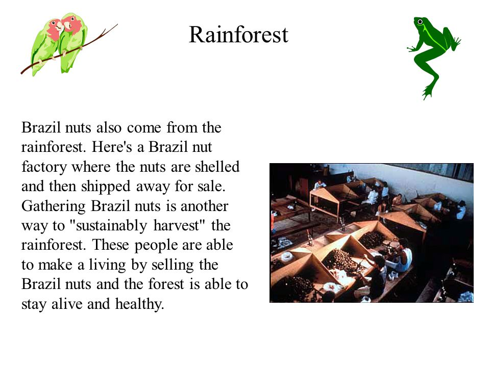 Brazil nuts also come from the rainforest.