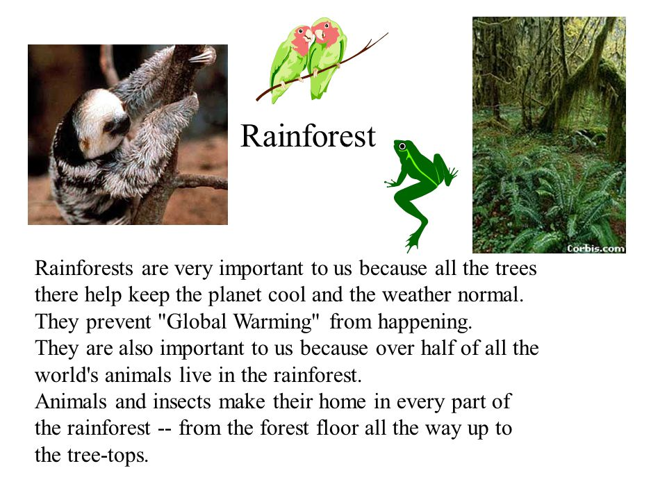Rainforests are very important to us because all the trees there help keep the planet cool and the weather normal.
