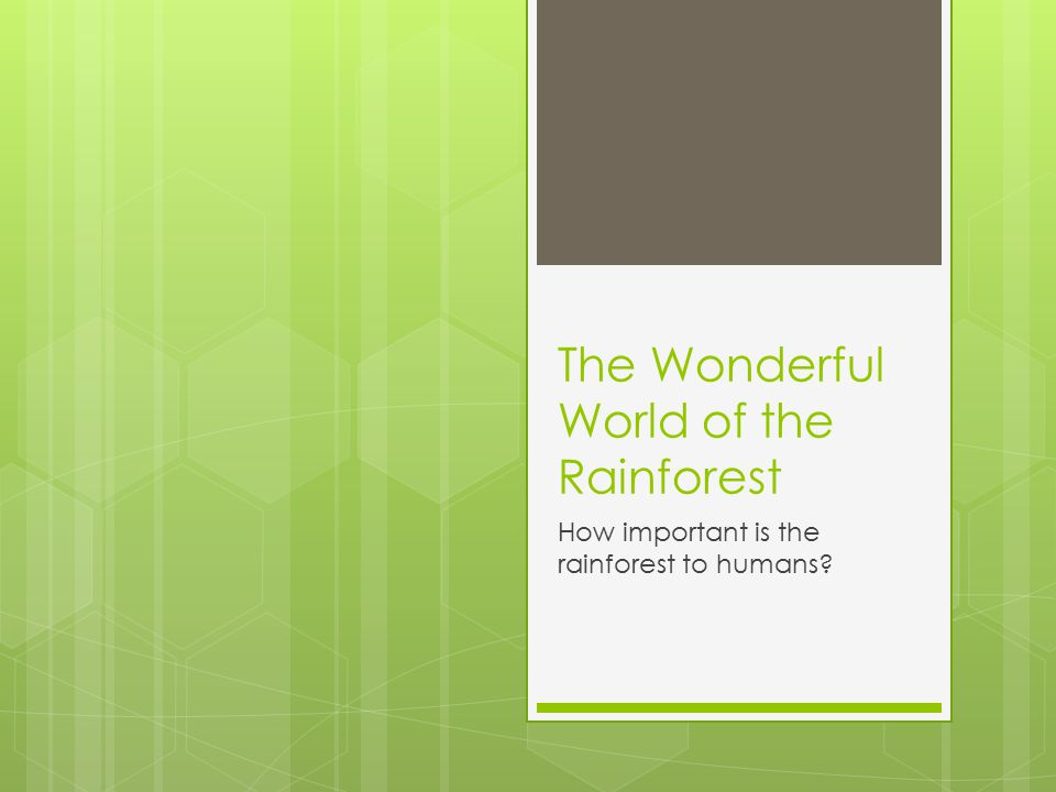 The Wonderful World of the Rainforest How important is the rainforest to humans