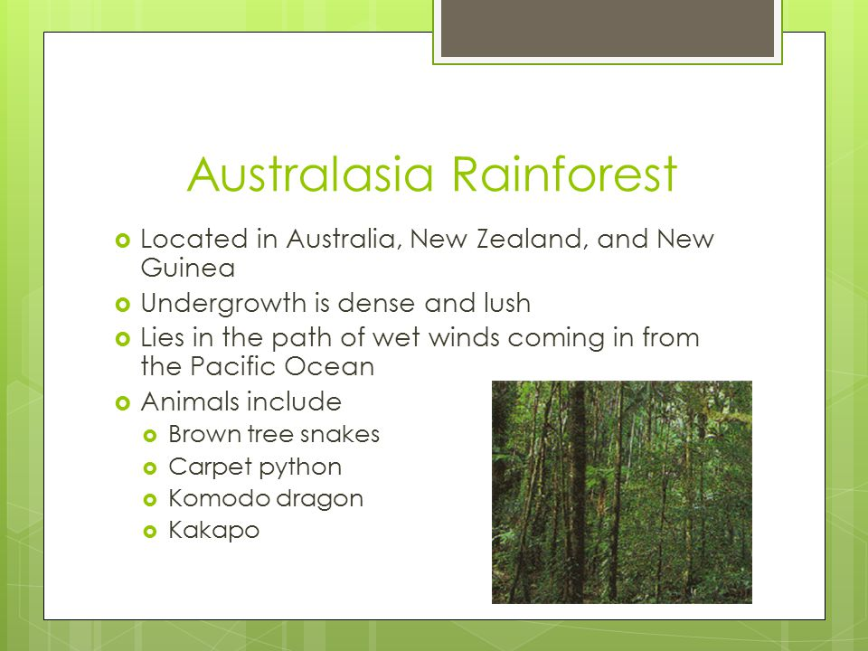 Australasia Rainforest  Located in Australia, New Zealand, and New Guinea  Undergrowth is dense and lush  Lies in the path of wet winds coming in from the Pacific Ocean  Animals include  Brown tree snakes  Carpet python  Komodo dragon  Kakapo