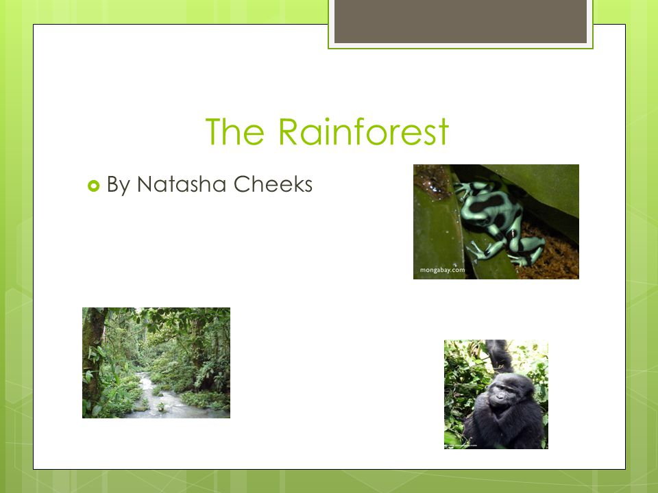 Overview  What is a rainforest.