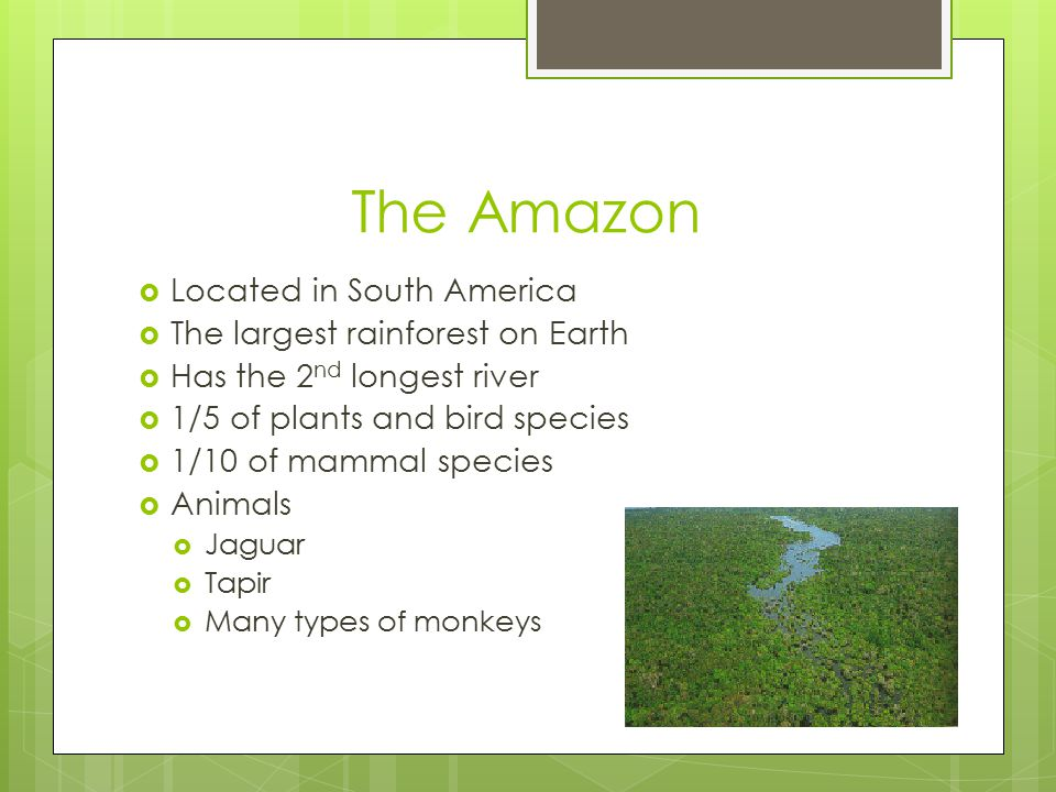 The Amazon  Located in South America  The largest rainforest on Earth  Has the 2 nd longest river  1/5 of plants and bird species  1/10 of mammal