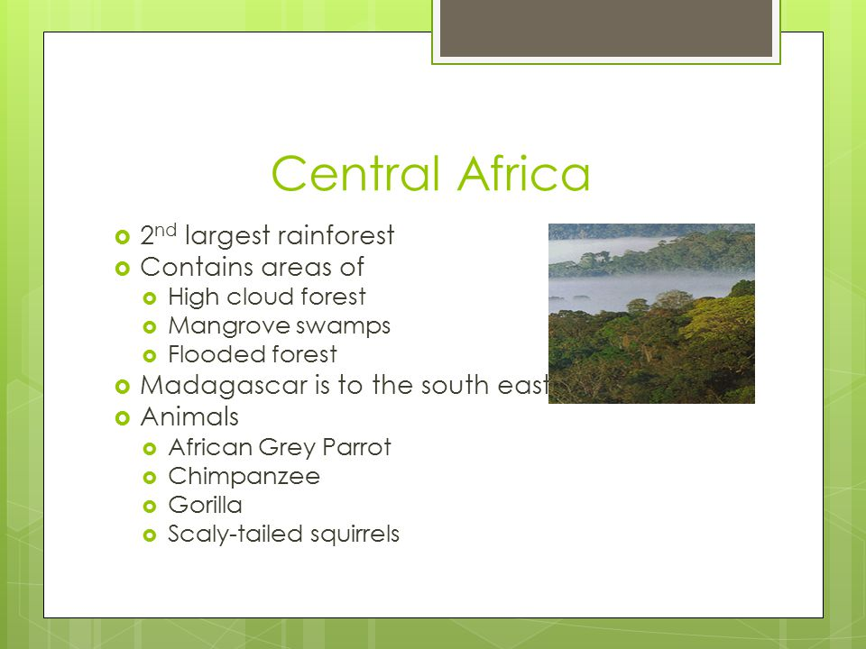 Central Africa  2 nd largest rainforest  Contains areas of  High cloud forest  Mangrove swamps  Flooded forest  Madagascar is to the south east