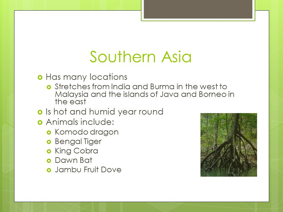 Southern Asia  Has many locations  Stretches from India and Burma in the west to Malaysia and the islands of Java and Borneo in the east  Is hot and humid year round  Animals include:  Komodo dragon  Bengal Tiger  King Cobra  Dawn Bat  Jambu Fruit Dove