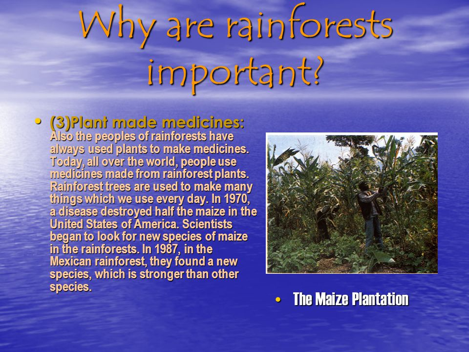 Why are rainforests important.