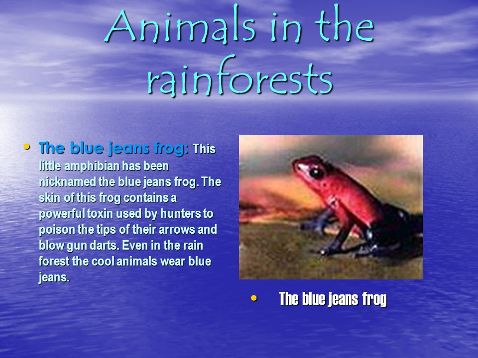 Animals in the rainforests The leaf cutter ants: They are one of the first life forms on earth to engage in a form of agriculture.