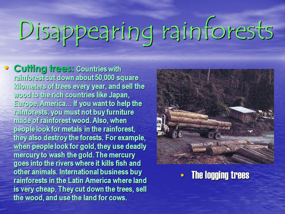 Disappearing rainforests Why are we destroying the rainforests that so QUICK.