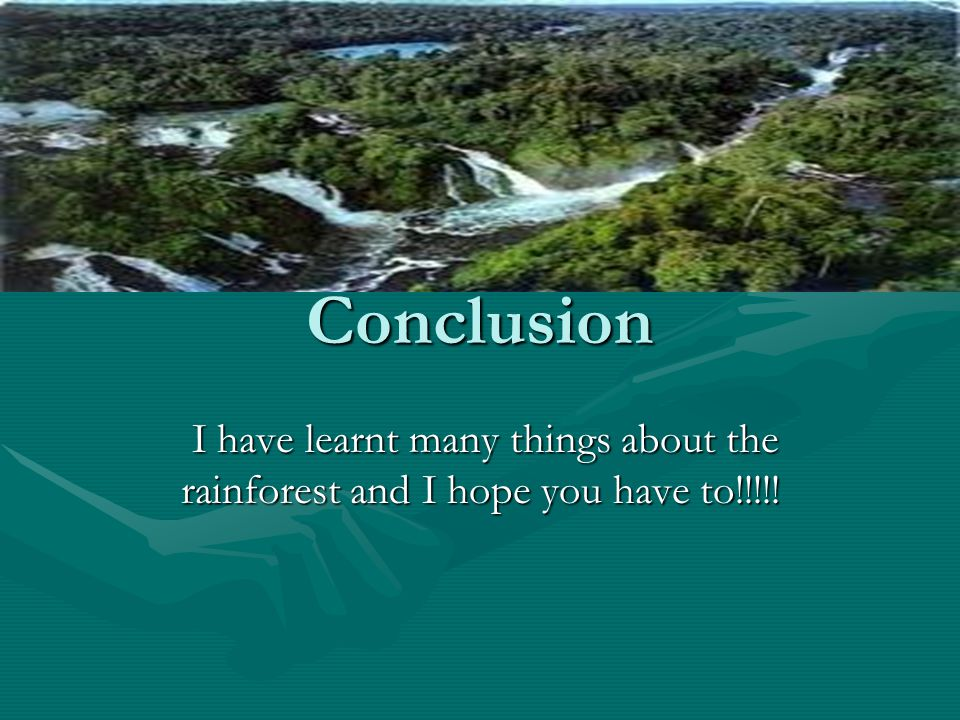 Conclusion I have learnt many things about the rainforest and I hope you have to!!!!! I have learnt many things about the rainforest and I hope you ha