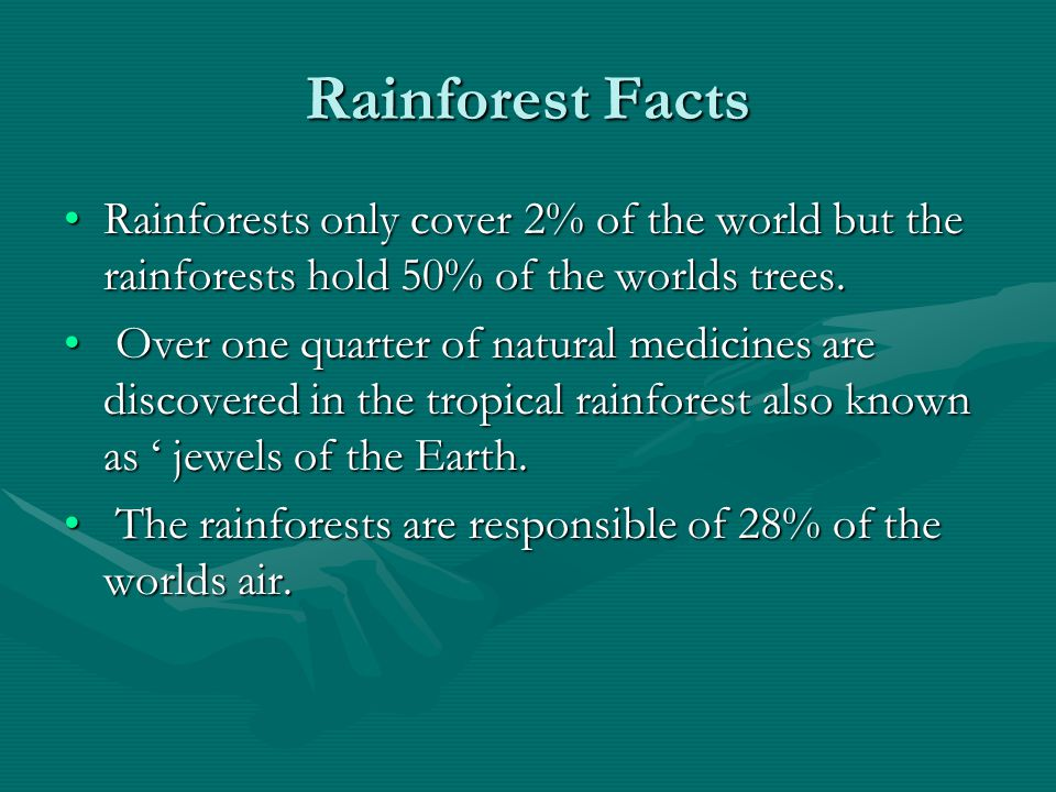 Rainforest Facts Rainforests only cover 2% of the world but the rainforests hold 50% of the worlds trees.Rainforests only cover 2% of the world but th