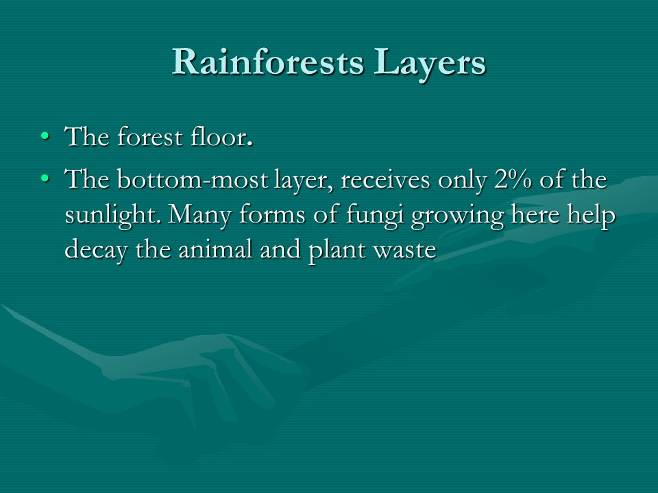 Rainforests Layers The forest floor.The forest floor. The bottom-most layer, receives only 2% of the sunlight. Many forms of fungi growing here help d