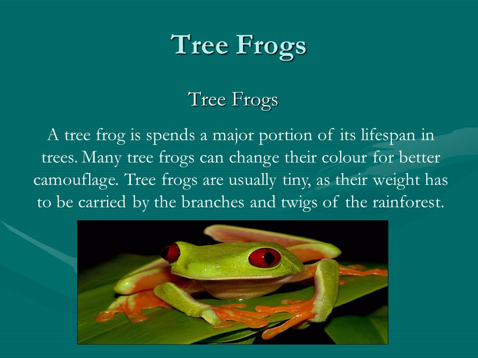 Tree Frogs Tree Frogs Tree Frogs A tree frog is spends a major portion of its lifespan in trees. Many tree frogs can change their colour for better ca