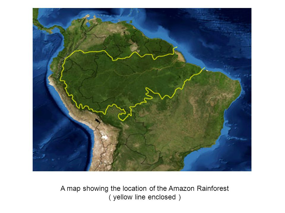 A map showing the location of the Amazon Rainforest ( yellow line enclosed )