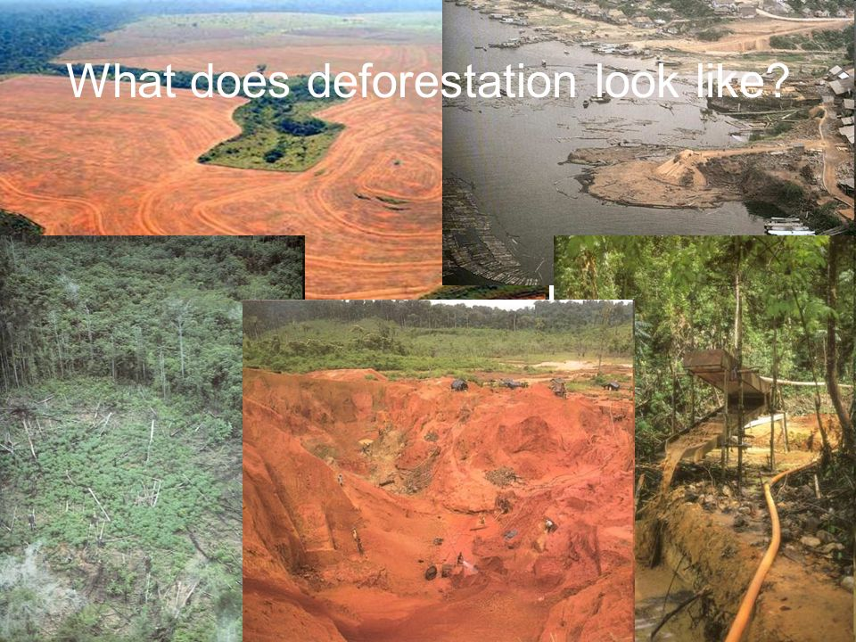 What does deforestation look like?