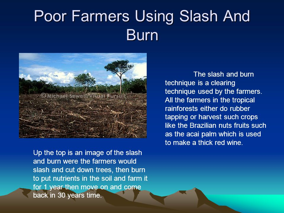 Poor Farmers Using Slash And Burn The slash and burn technique is a clearing technique used by the farmers. All the farmers in the tropical rainforest