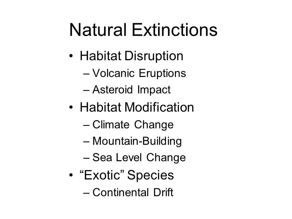 Natural Extinctions Habitat Disruption –Volcanic Eruptions –Asteroid Impact Habitat Modification –Climate Change –Mountain-Building –Sea Level Change Exotic Species –Continental Drift