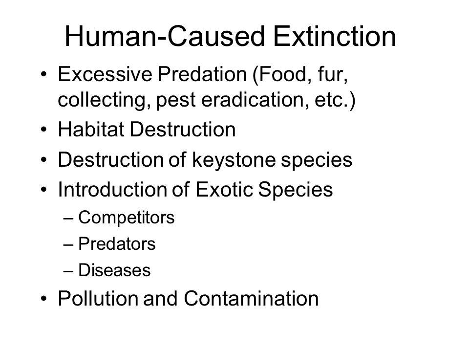 Human-Caused Extinction Excessive Predation (Food, fur, collecting, pest eradication, etc.) Habitat Destruction Destruction of keystone species Introduction of Exotic Species –Competitors –Predators –Diseases Pollution and Contamination