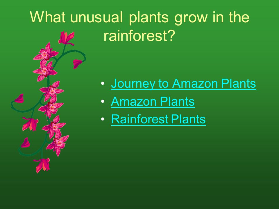 What unusual plants grow in the rainforest? Journey to Amazon Plants Amazon Plants Rainforest Plants