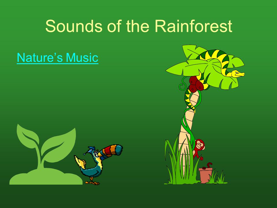 Sounds of the Rainforest Nature's Music