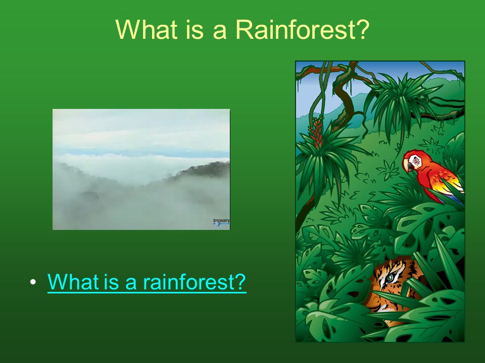What is a Rainforest? What is a rainforest?