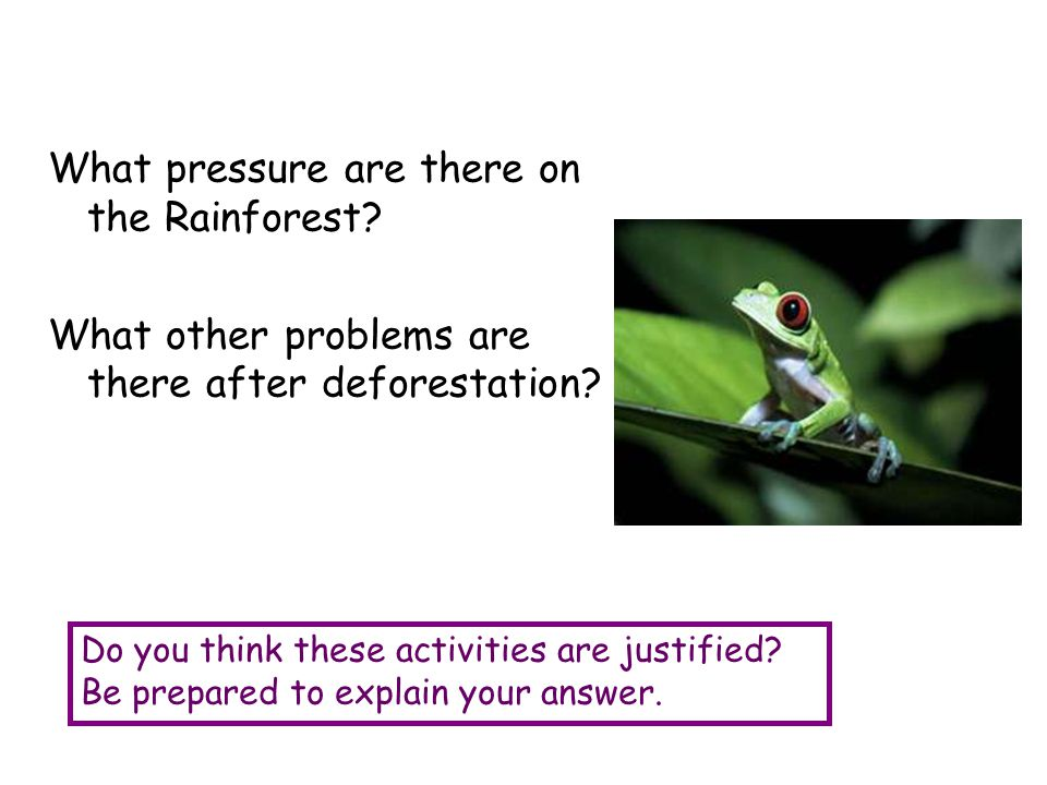 What pressure are there on the Rainforest? What other problems are there after deforestation? Do you think these activities are justified? Be prepared