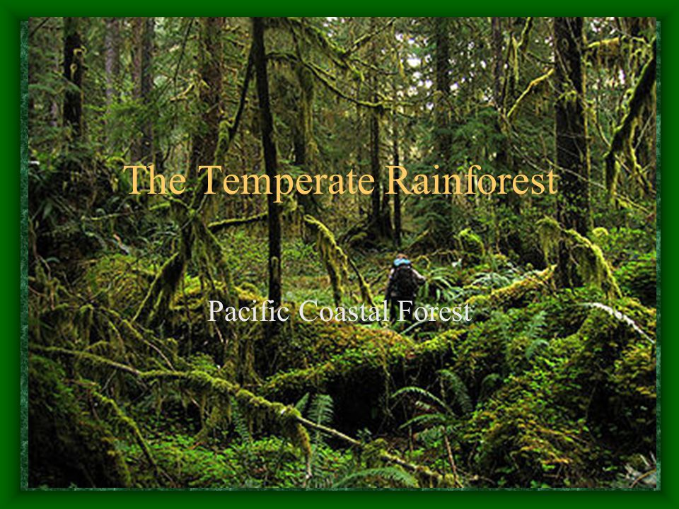 Climate and Geography Temperate Rainforest is defined as a forest in the mid-latitudes that receives more than 50-60 inches of rainfall a year (rainfall in SE AK varies from 48-300 inches per year) Mild, wet winters and cool, foggy or cloudy summers Winter temperatures rarely drop below freezing, and summer temperatures seldom exceed 80° Can be found in the Pacific NW of North America, New Zealand, Tasmania and Patagonia.