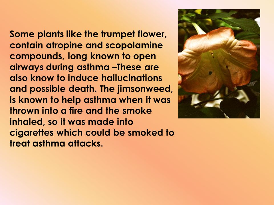 Some plants like the trumpet flower, contain atropine and scopolamine compounds, long known to open airways during asthma –These are also know to indu