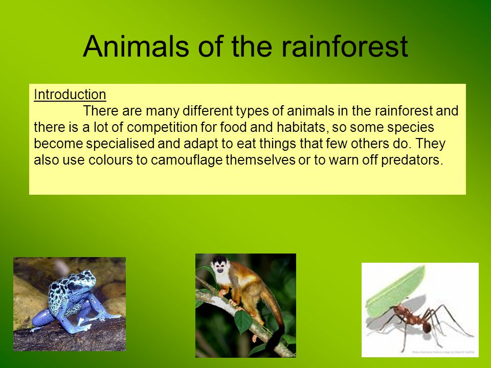 Animals of the rainforest Introduction There are many different types of animals in the rainforest and there is a lot of competition for food and habi