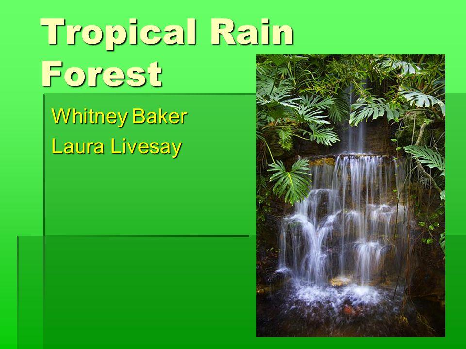 Tropical Rain Forest Whitney Baker Laura Livesay