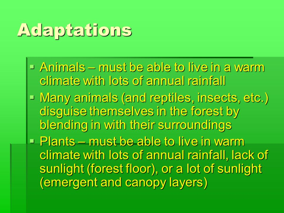 Adaptations  Animals – must be able to live in a warm climate with lots of annual rainfall  Many animals (and reptiles, insects, etc.) disguise themselves in the forest by blending in with their surroundings  Plants – must be able to live in warm climate with lots of annual rainfall, lack of sunlight (forest floor), or a lot of sunlight (emergent and canopy layers)