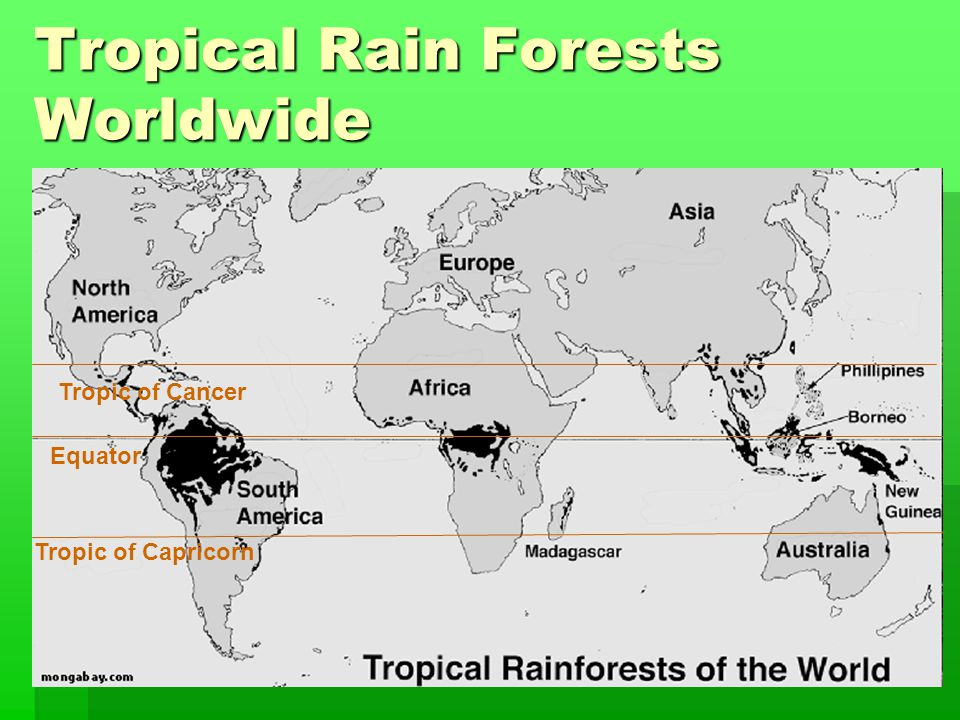 Tropic of Capricorn Tropic of Cancer Equator Tropical Rain Forests Worldwide