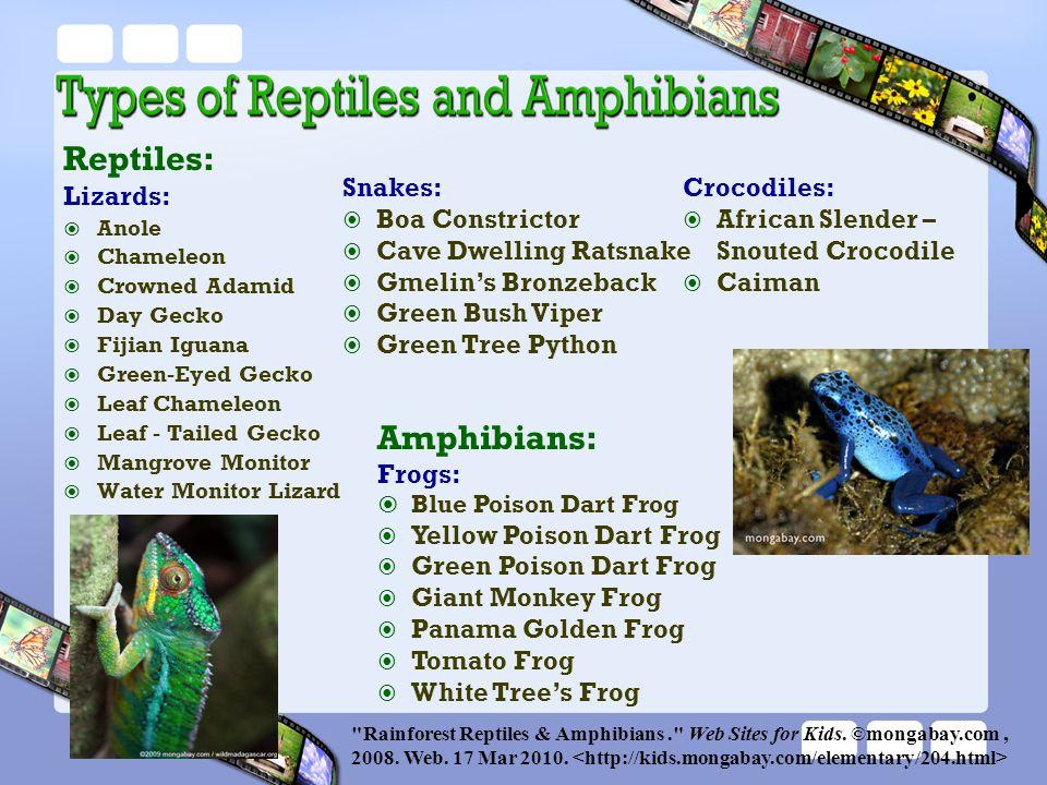 Reptiles: Lizards:  Anole  Chameleon  Crowned Adamid  Day Gecko  Fijian Iguana  Green-Eyed Gecko  Leaf Chameleon  Leaf - Tailed Gecko  Mangro