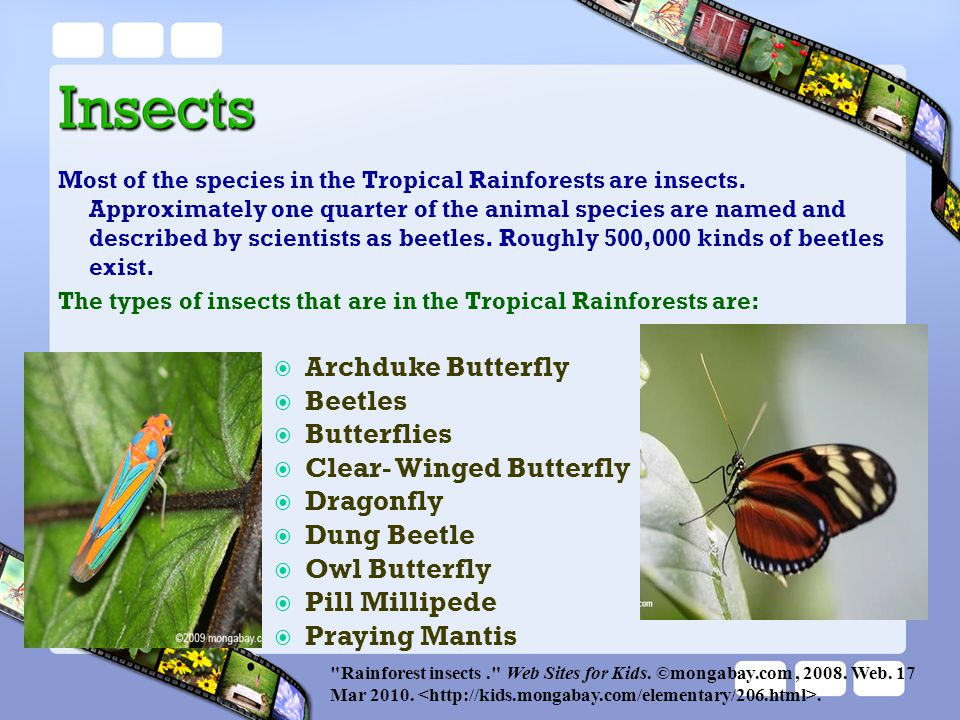 Most of the species in the Tropical Rainforests are insects. Approximately one quarter of the animal species are named and described by scientists as