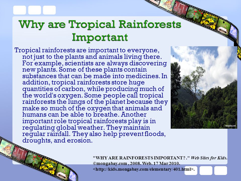Tropical rainforests are important to everyone, not just to the plants and animals living there. For example, scientists are always discovering new pl