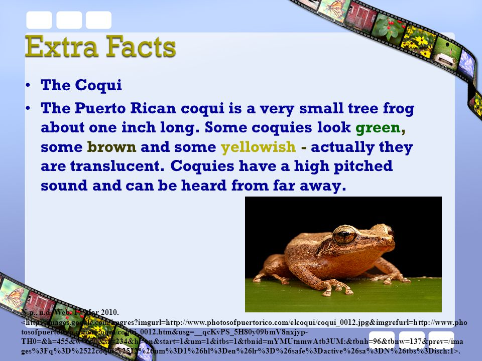 The Coqui The Puerto Rican coqui is a very small tree frog about one inch long. Some coquies look green, some brown and some yellowish - actually they