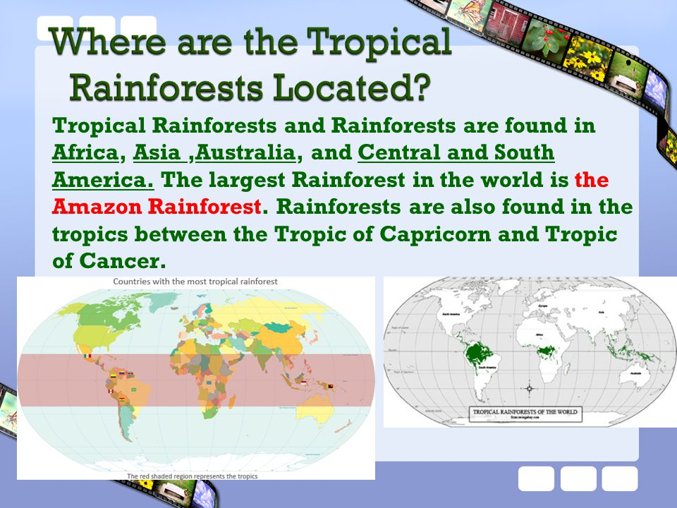 Rainforests stabilize the earth's climate by absorbing the carbon dioxide (CO 2 ) and then produces oxygen (O 2 ).
