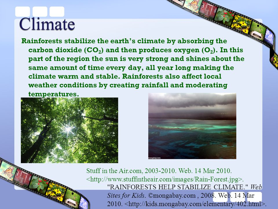 Rainforests stabilize the earth's climate by absorbing the carbon dioxide (CO 2 ) and then produces oxygen (O 2 ). In this part of the region the sun
