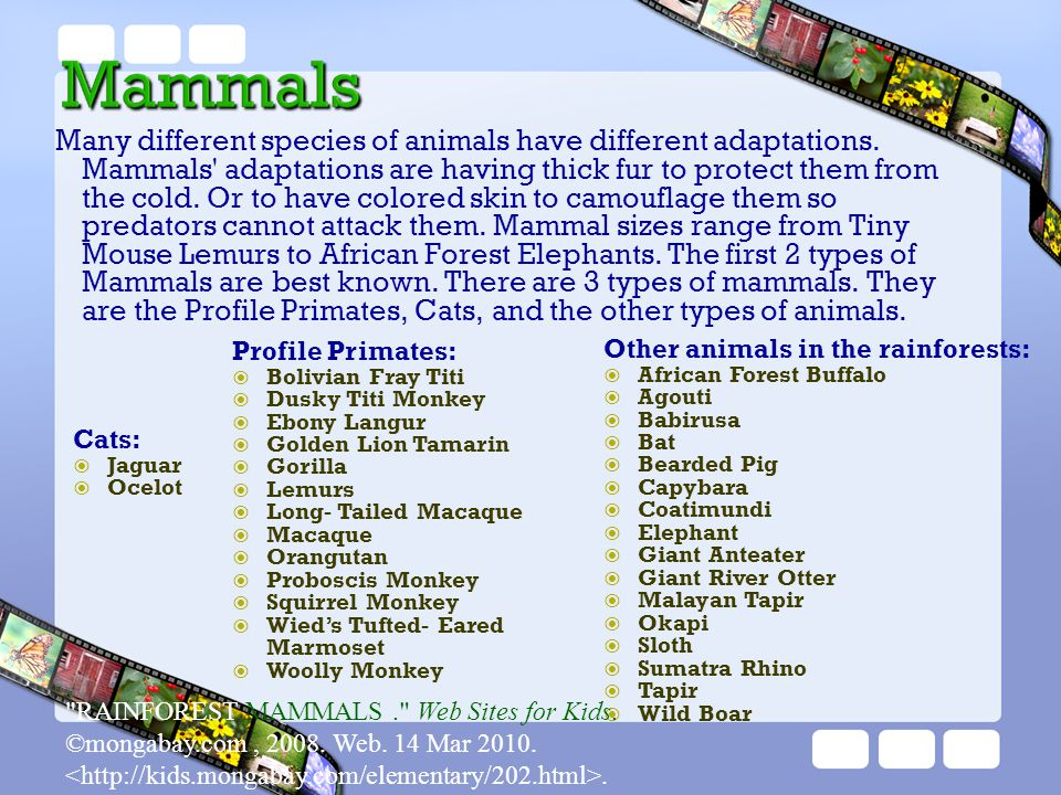Many different species of animals have different adaptations. Mammals' adaptations are having thick fur to protect them from the cold. Or to have colo