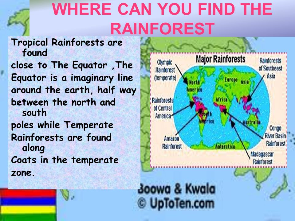 WHERE CAN YOU FIND THE RAINFOREST Tropical Rainforests are found close to The Equator,The Equator is a imaginary line around the earth, half way between the north and south poles while Temperate Rainforests are found along Coats in the temperate zone.
