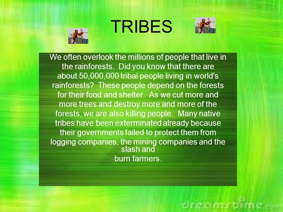 TRIBES We often overlook the millions of people that live in the rainforests.