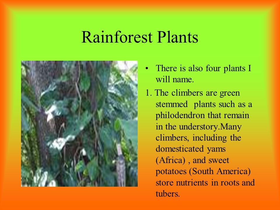 Rainforest Plants There is also four plants I will name.