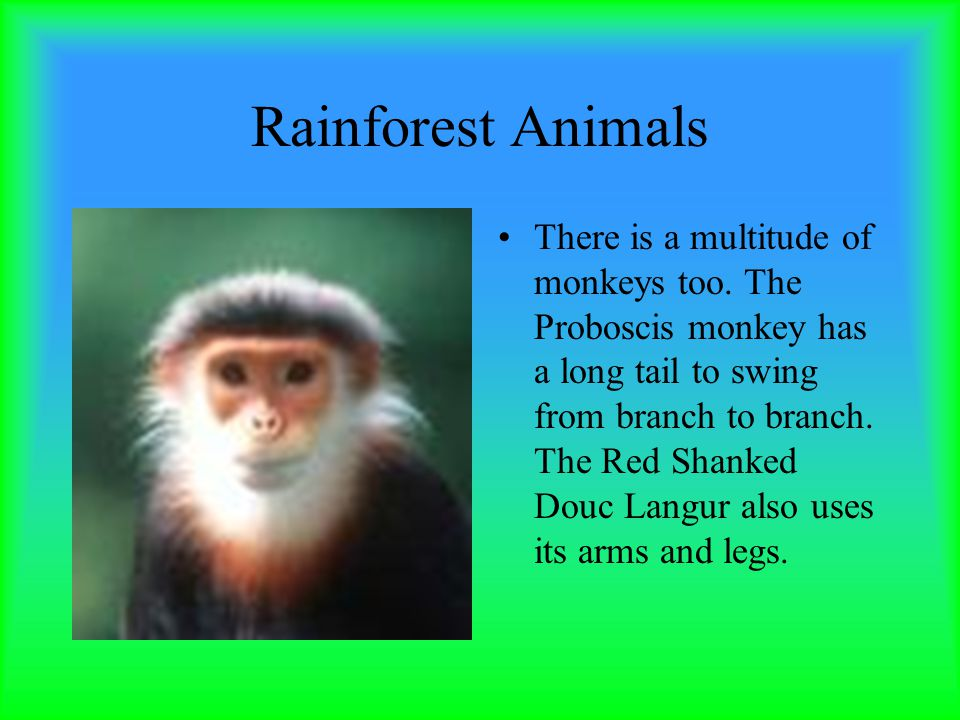 Rainforest Animals There is a multitude of monkeys too.