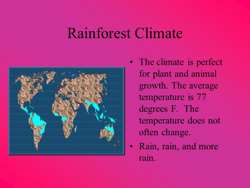 Rainforest Climate The climate is perfect for plant and animal growth.