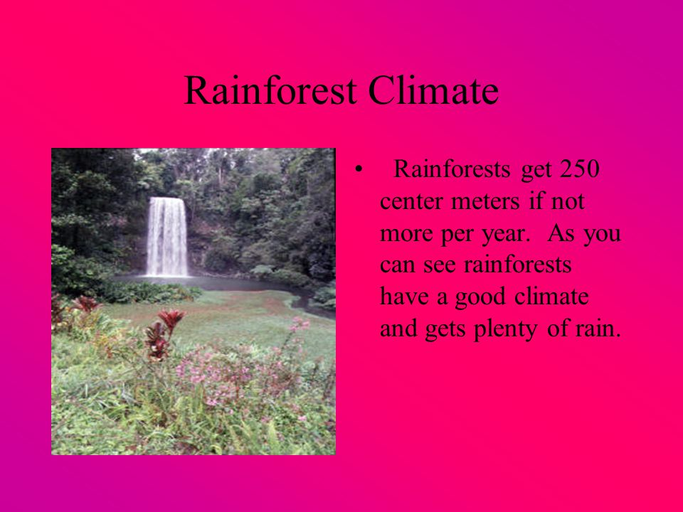 Rainforest Climate Rainforests get 250 center meters if not more per year.