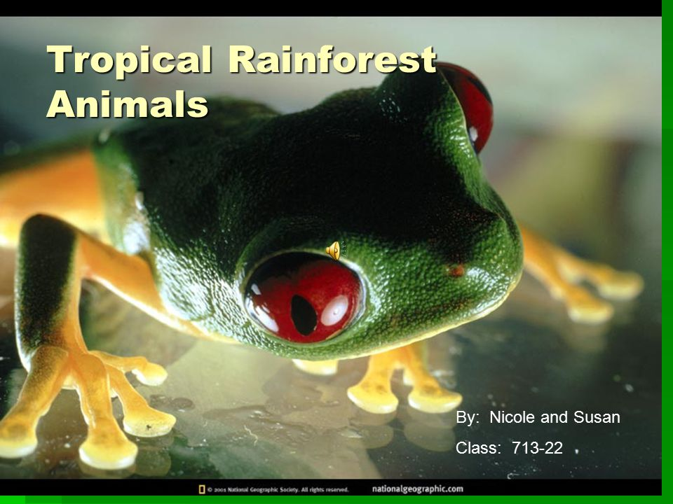 Tropical Rainforest Animals By: Nicole and Susan Class: 713-22