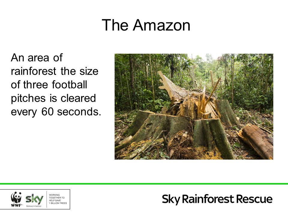 The Amazon An area of rainforest the size of three football pitches is cleared every 60 seconds.