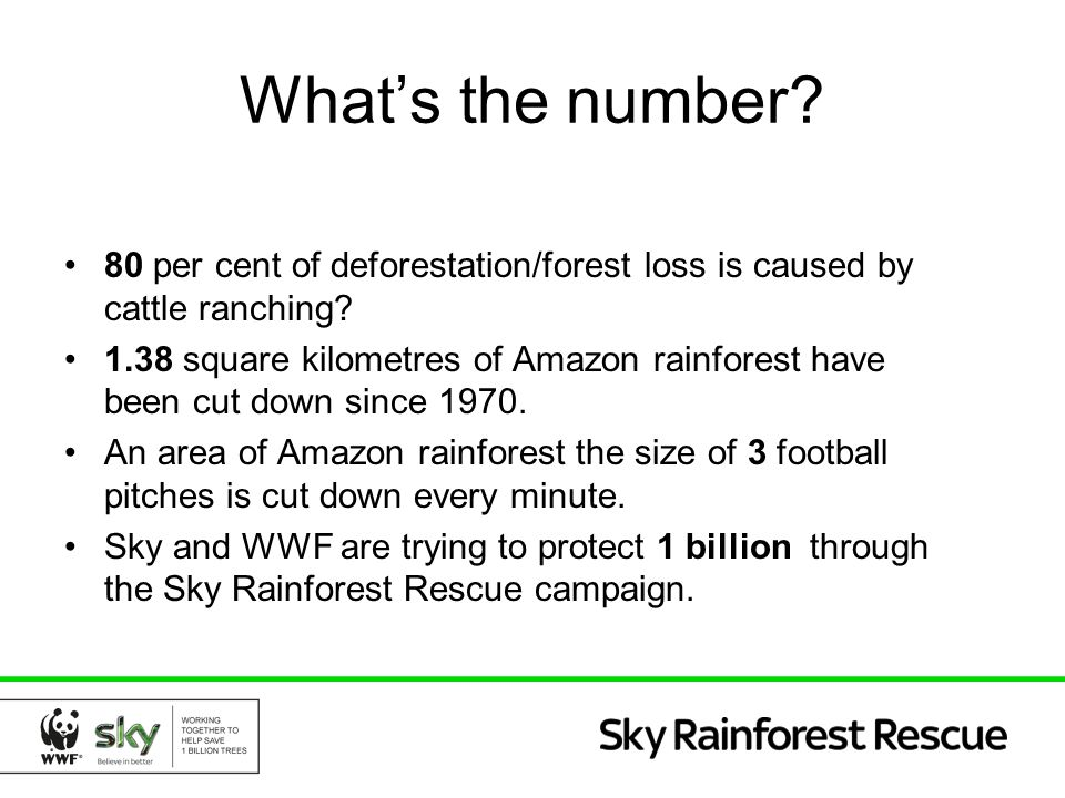 What's the number? 80 per cent of deforestation/forest loss is caused by cattle ranching? 1.38 square kilometres of Amazon rainforest have been cut do