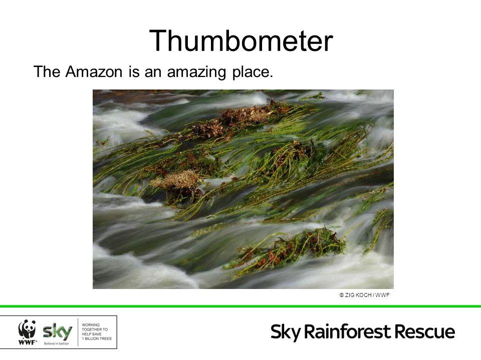 Thumbometer The Amazon is an amazing place. © ZIG KOCH / WWF